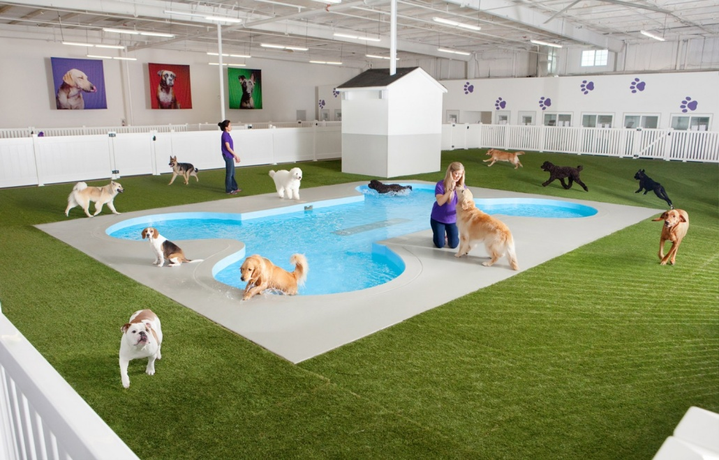 JFK NYC Airport Dog Pool